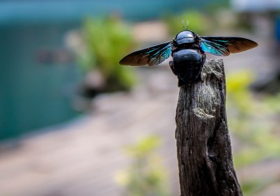 Beautiful wildlife at Ratchaprapa Dam.