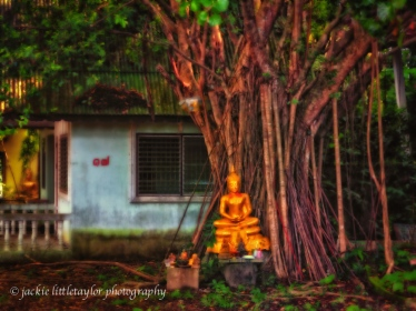 small buddha next to tree Wat Siray impressi