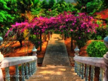 Pink flower arch Garden Wat Sapum Thammaram Phuket Thailand
