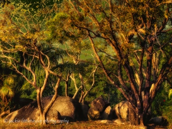 boulders and trees sunset impression
