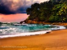 sunset green water tropical trees beach