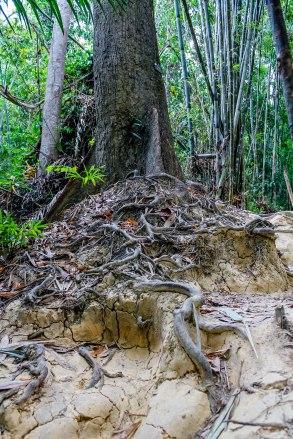 Jungle trek.