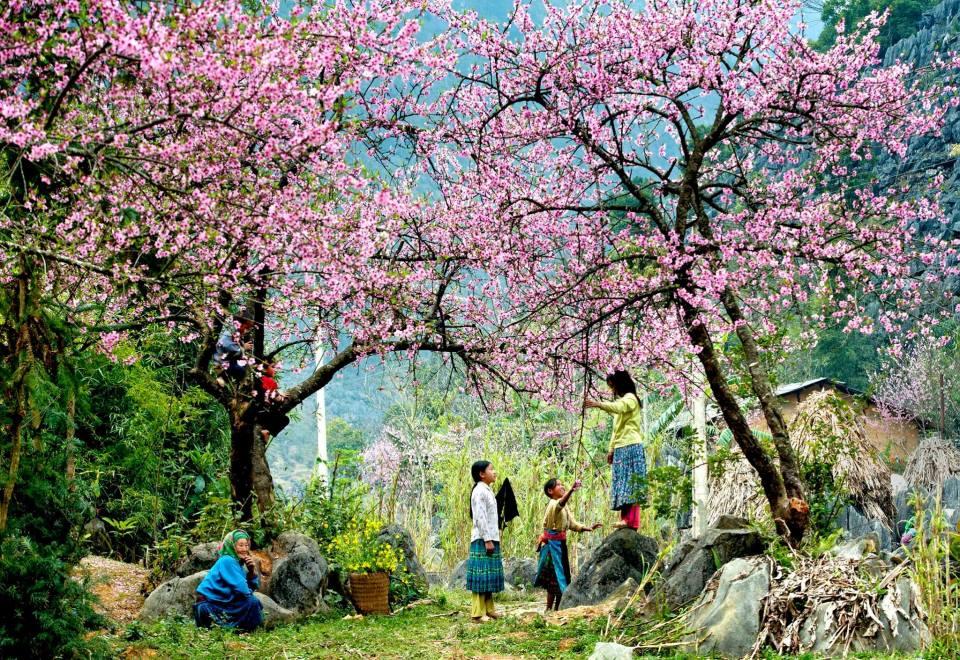 """Xuân trên bản Mông...Spring on H""""mong vilage-Ha giang-Viet Nam  Vu Ngoc"""
