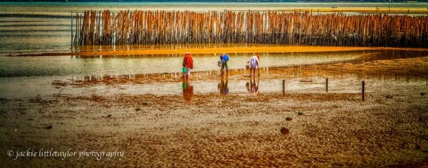 locals harvest clams