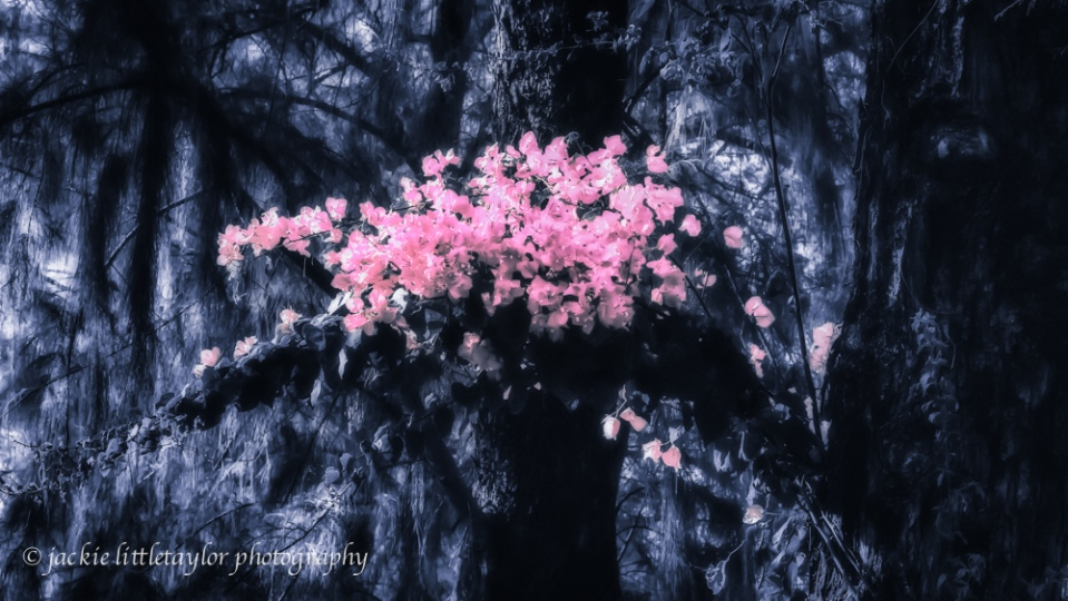 Botan flower print