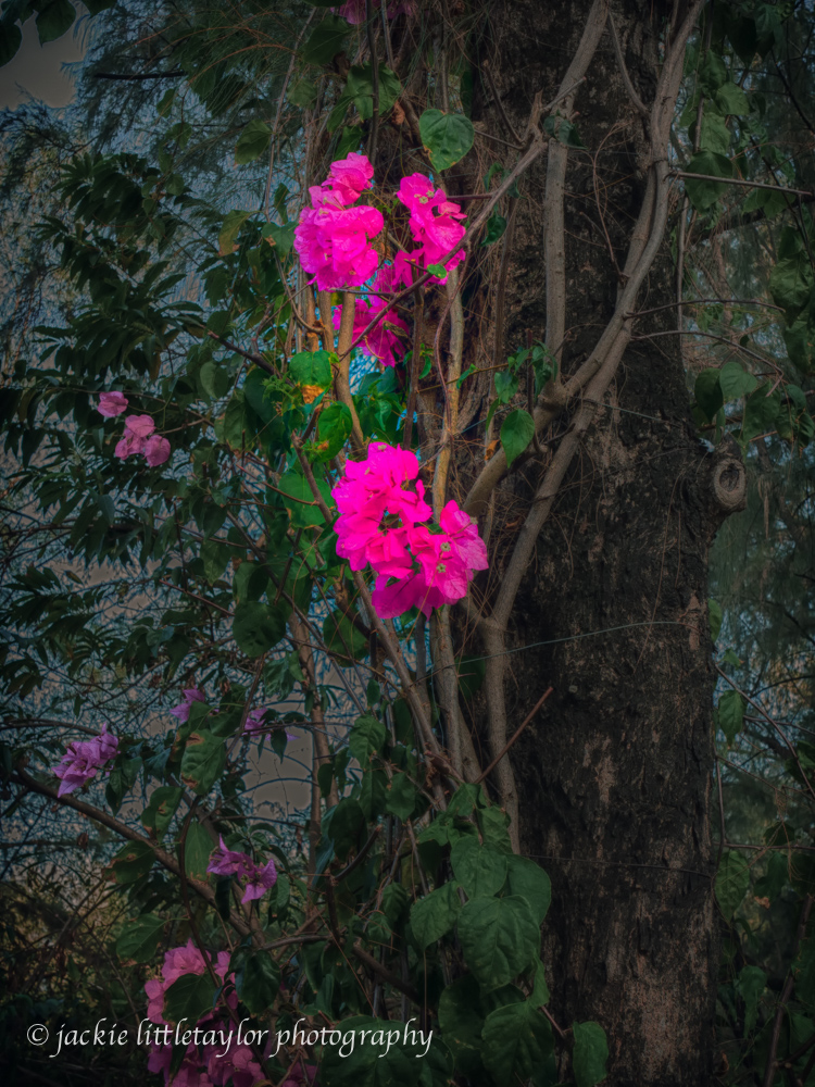 pink flowers green leaves tree HDR