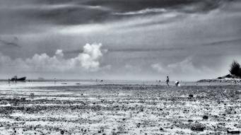 monday morning impression mudflats evening harvest clams B/W 16x
