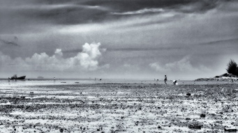 monday morning impression mudflats evening harvest clams B/W 16x
