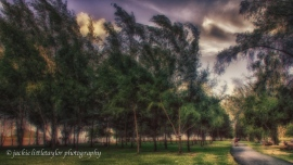 walk in the park trees wind impression soft warm sunset HDR