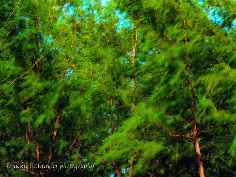 wind thru the tree tops green impression