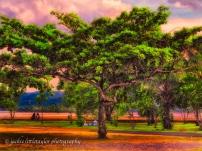couples enjoy sunset under the tree impression