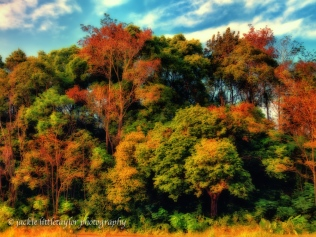 beauty and color of trees impression