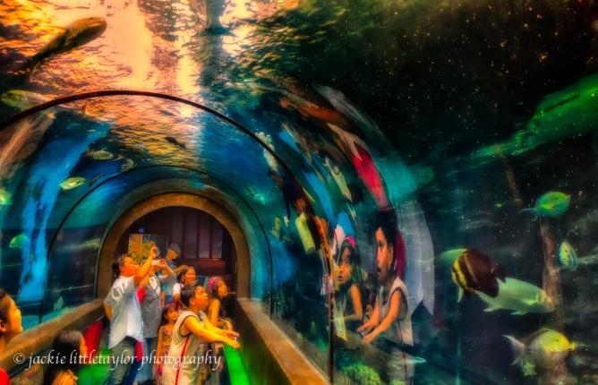amazing fish and people impression