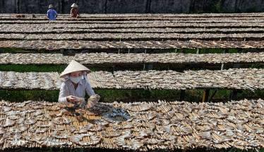 Mùa Cá Cơm Season Fish Rice