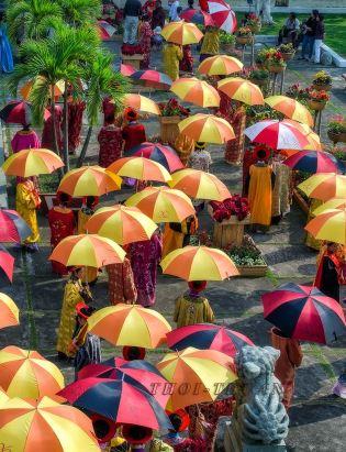 Ô dù Umbrellas