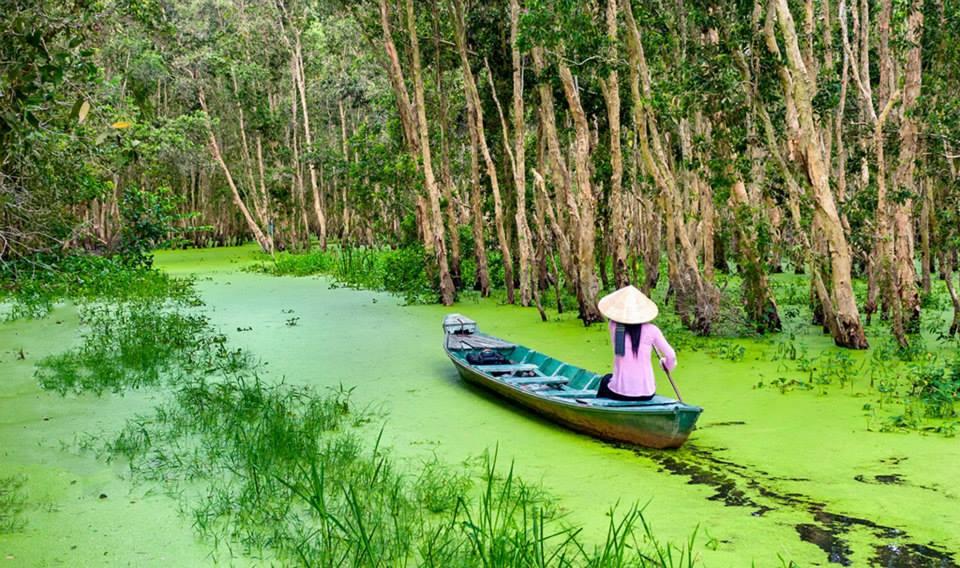 Rừng Tràm Mùa Nước Nổi Paperbark Floating Water Season