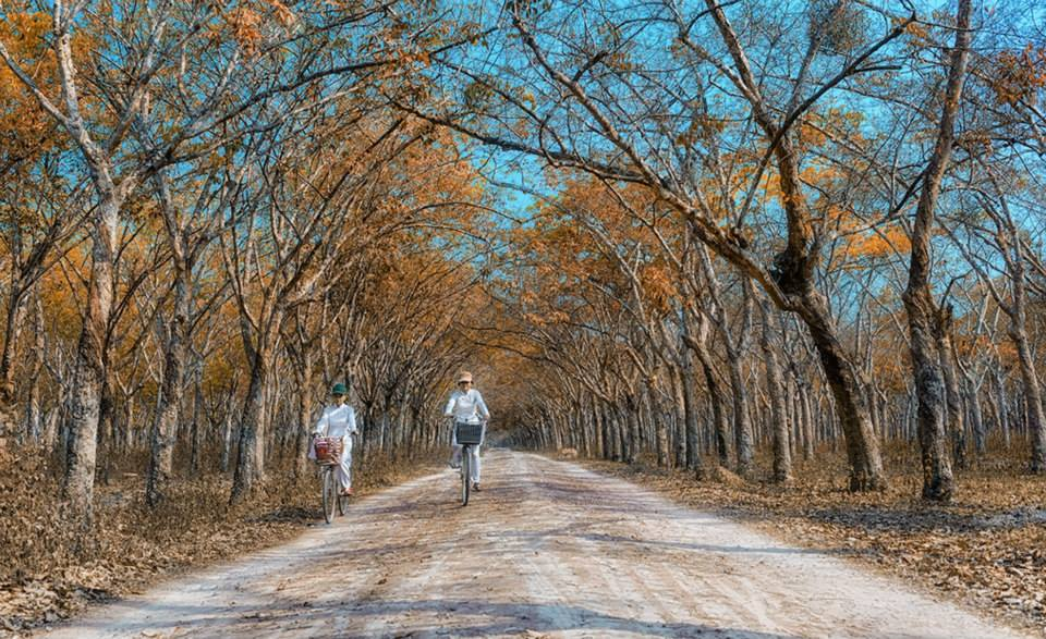 Rừng Thu Autumn Forest