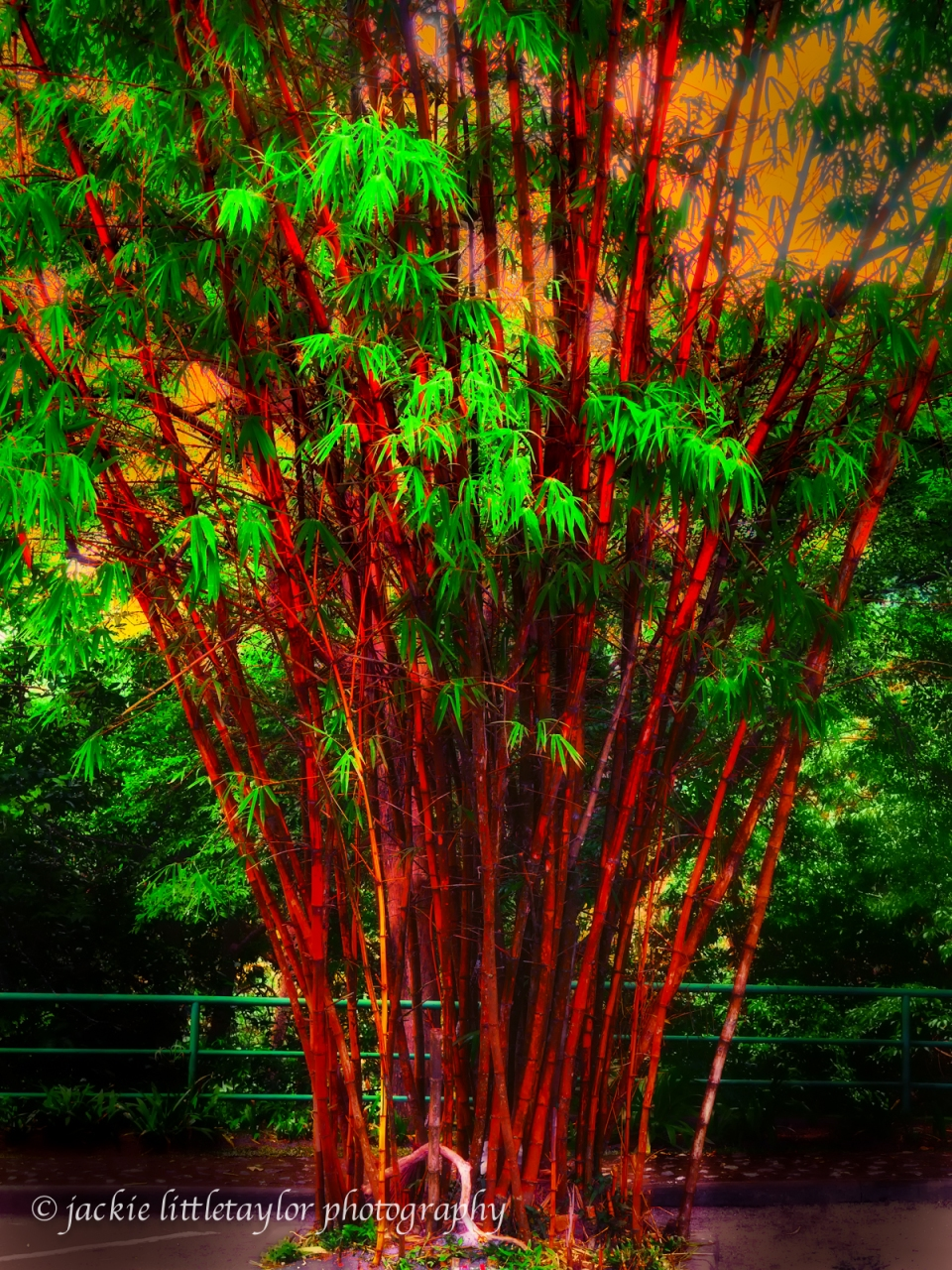 bamboo  red and green impression