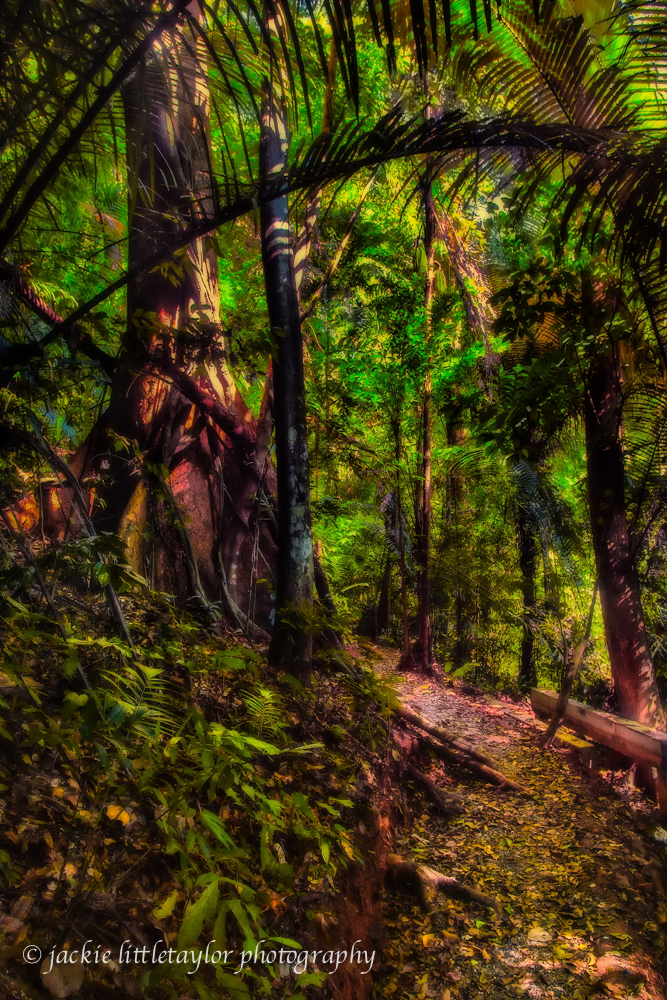 trail tropical forest impression