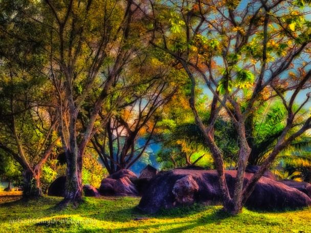 sunlight thru the trees evening