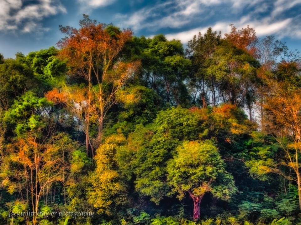 beauty of trees