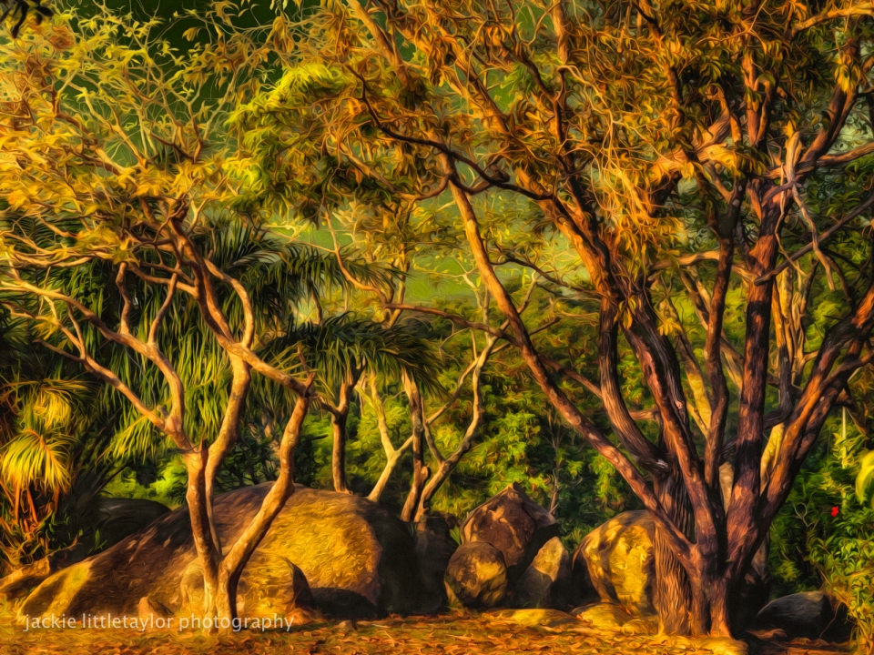 boulders and trees sunset Oil impression